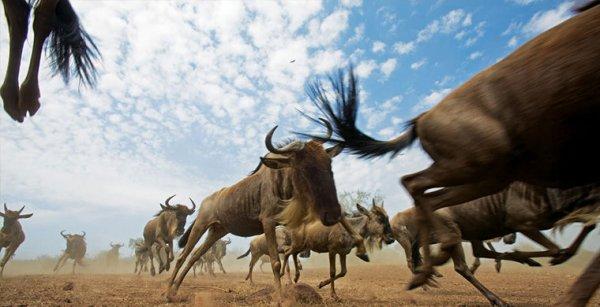 Ученые рассказали о миграции, случившейся в Африке более 4000 лет назад