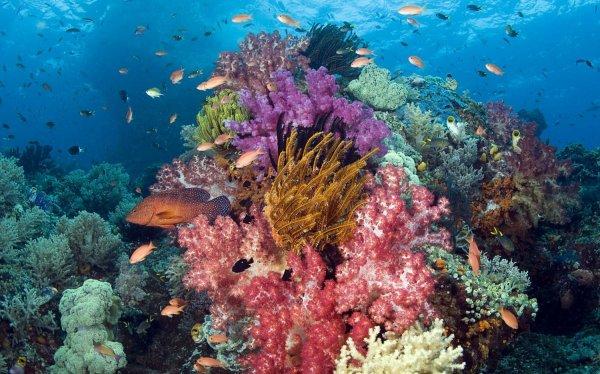 Ученые обнаружили бактерии, способные спасти коралловые рифы