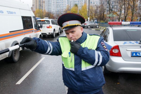 Сотрудники московского ГИБДД задержали лося-нарушителя