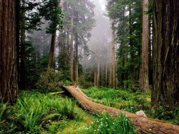 Ученые: Экосистемы постоянно подстраиваются под изменения климата
