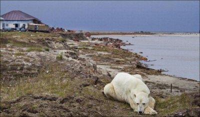 Со всей России ученые летят на остров Белый
