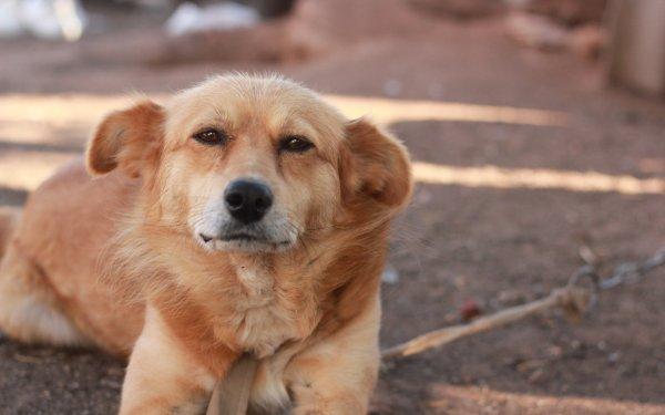 Роспотребнадзор: В России участились случаи употребления в пищу собачьего мяса