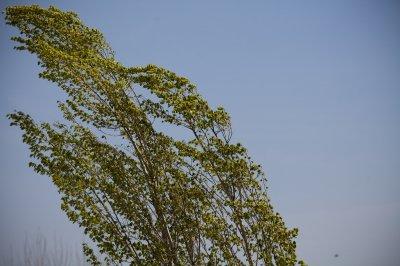 Штормовой ветер в Липецке ломает деревья