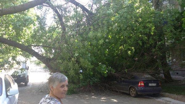 В Ростове дерево упало на детскую площадку и прижало машину