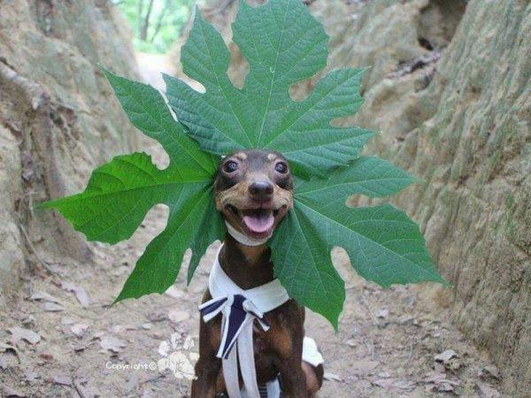 Тайваньская собачка в шляпках из фруктов стала звездой Интернета