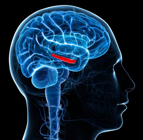 Ученые: Импланты помогут в лечении болезней головного мозга