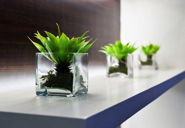 Ученые: В офисах с комнатными растениями повышается производительность сотрудников