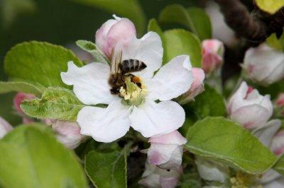 Ученые: На размножение растений влияет модель передвижения насекомых