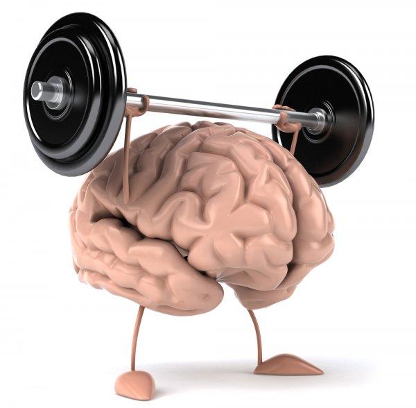 Психические и физические упражнения оказывают разное влияние на мозг