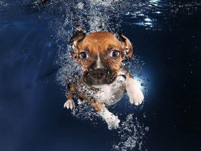 Ученые из России научили собак дышать под водой