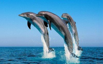 Ученые доказали, что морские млекопитающие скорбят о своих мертвых собратьях