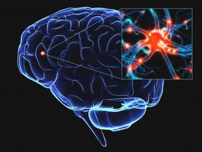 Ученые смогли визуализировать работу головного мозга при решении математических задач