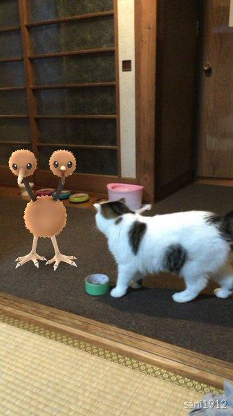 В Японии доказали, что домашние животные способны видеть покемонов