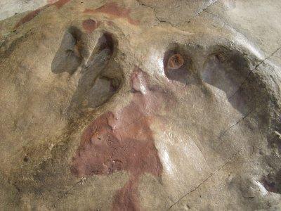 В Боливии ученые обнаружили огромный след динозавра