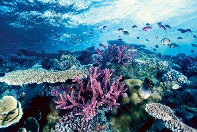 Ученые нашли новый вид кораллов-одиночек