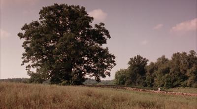 В США ветер повалил дуб из фильма «Побег из Шоушенка»
