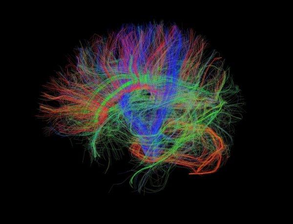 Ученые продолжают открывать тайны головного мозга человека