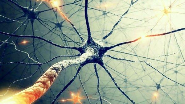Появление новых нейронов в мозгу человека находиться под вопросом