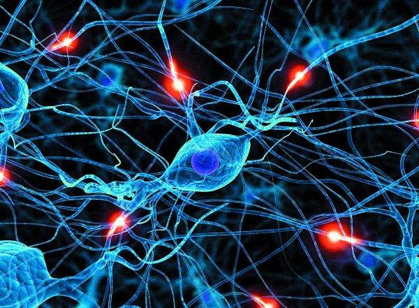 Ученые: У взрослых людей новые нейроны в мозге не воспроизводятся