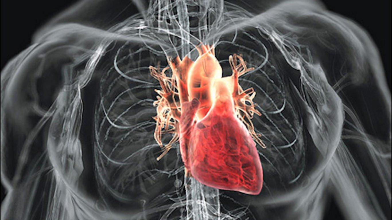 почему в присутствии врача сильно бьется сердце зависимости материала