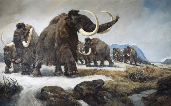 Ученые установили причину, по которой вымерли последние мамонты