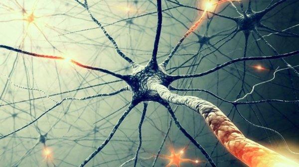 Ученые сделали на основе мозговых нейронов носители информации
