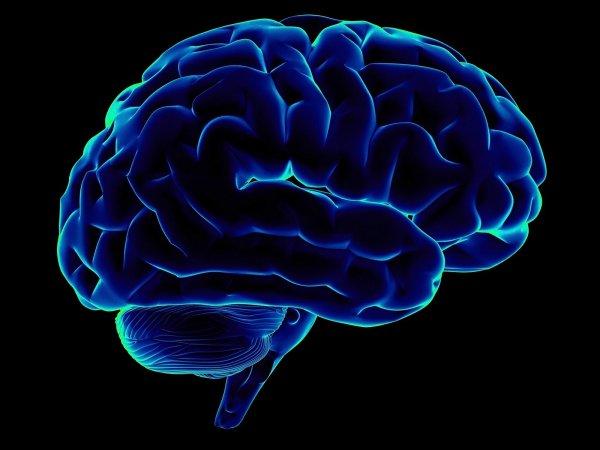 Ученые доказали, что ожирение ускоряет старение мозга