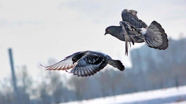 Ученые: Птицы спят во время полета