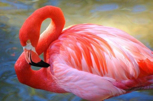 Во Флориде посетитель зоопарка жестоко убил танцующего фламинго