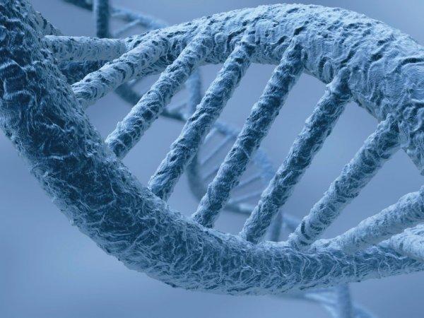 Существование «проклятья матери» официально подтверждено биологами