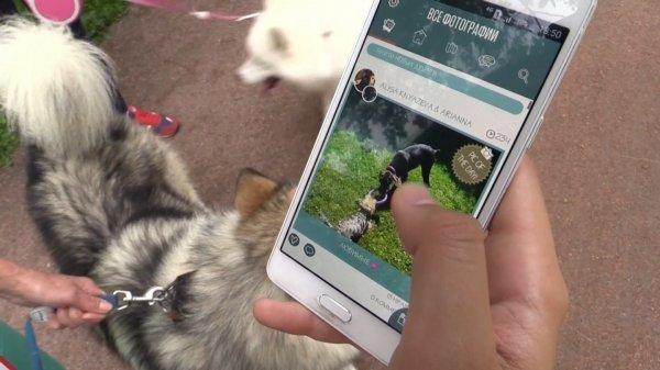В Петербурге протестировали социальную сеть для собак