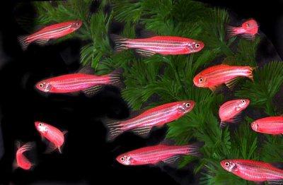 Ученые нашли рыб, которые имеют сенсоры для защиты от хищников