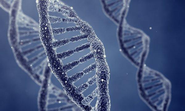 Ученым удалось идентифицировать ген синдрома Дауна
