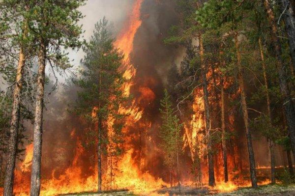 Россия поможет Португалии в тушении лесных пожаров