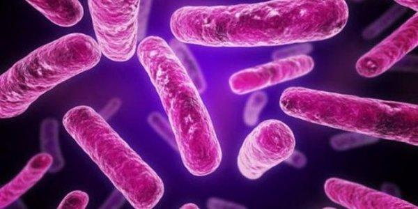Ученые обнаружили наличие биологических часов у кишечных бактерий