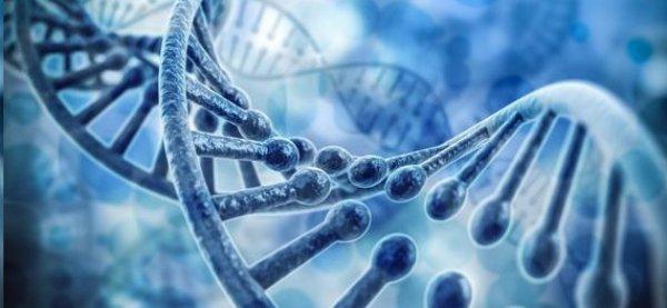 Ученые: Работу организма в жару регулирует ген TRPM2