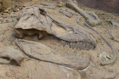 На Ямале туристы обнаружили скелет динозавра