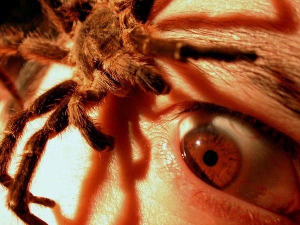 Ученые обнаружили методику лечения арахнофобии
