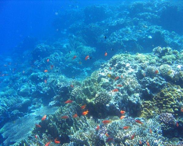 Ученые обнаружили новый риф за Большим Барьерным рифом