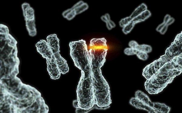 Ученые: Нестабильность хромосом можно использовать для лечения рака