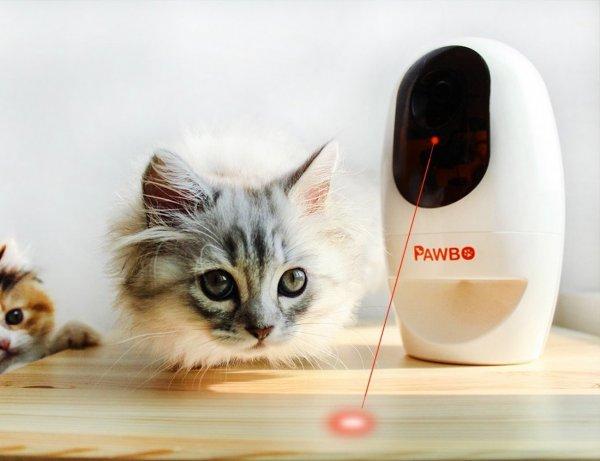 Acer представила «видеоняню» для домашних животных