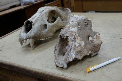 В Башкорстане найдены останки гигантских животных