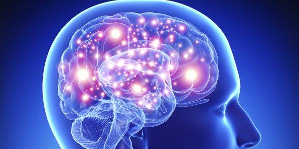 Ученые исследовали зависимость развития мозга от генетики