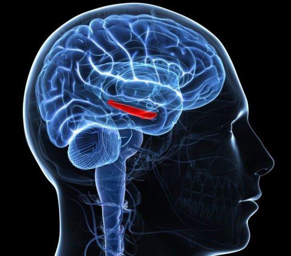 Хронический стресс ведет к развитию слабоумия
