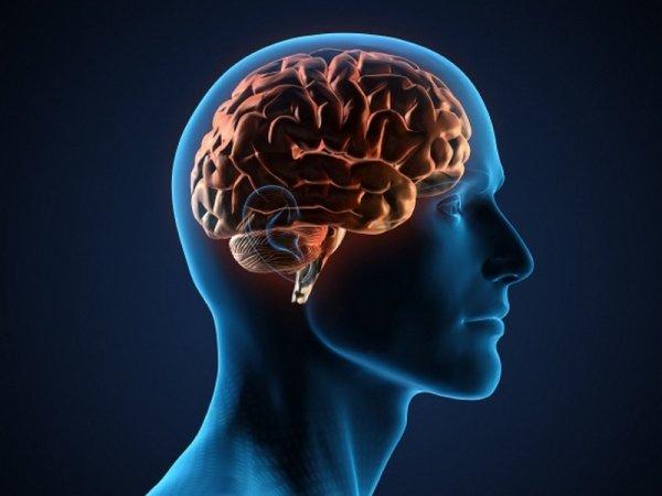 Ученые научились управлять эмоциональными реакциями мозга