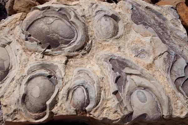 Ученые обнаружили на Земле доказательства существования жизни на Марсе