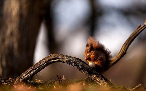 Ученые: 15% видов диких животных Великобритании находятся на грани вымирания