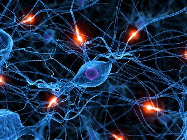 Учёные открыли метод регенерации нервных клеток