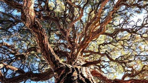 В Сети появились уникальные фотографии природы, снятые на iPhone 7 Plus