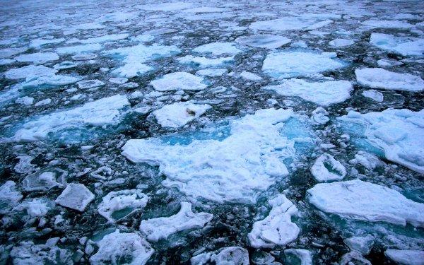 Ученые: Площадь льда в Арктике достигла рекордного минимума